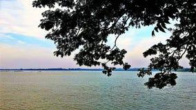 树枝和海 免版税图库摄影