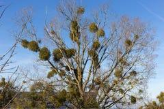 树枝和莓果在他们秋天11月 库存照片