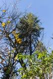 树枝和莓果在他们秋天11月 免版税图库摄影