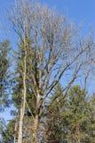 树枝和莓果在他们秋天11月 免版税库存照片