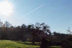 树枝和莓果在他们秋天11月 库存图片