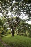 树枝在公园 库存图片