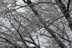 树枝在冰包括在冬天风暴以后 库存照片