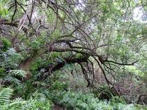 树枝垂悬在森林土道路 免版税库存图片