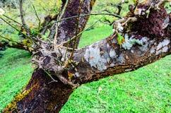 树枝大纯净的新鲜的叶子。 免版税库存照片