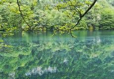 树枝弯曲对水 在蓝色湖 2008 4月3280日上生高加索北部峰顶土坎岩石俄国 库存图片