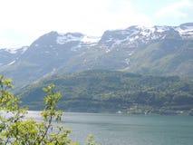 树枝有海湾和多雪的山的背景 库存图片