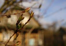 树枝板簧村庄房子蓝天阳光 免版税图库摄影