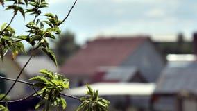 树枝特写镜头摇摆在风的 在摇摆在房子背景的风的树分支的绿色叶子和 影视素材