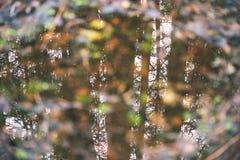 树枝的反射在秋天上色了水的葡萄酒r 免版税图库摄影
