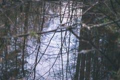 树枝的反射在秋天上色了水的葡萄酒r 库存照片