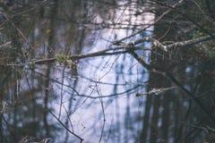 树枝的反射在秋天上色了水的葡萄酒r 免版税库存照片