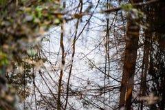 树枝的反射在秋天上色了水 库存照片
