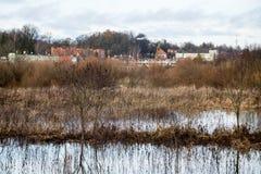 树枝的反射在秋天上色了水 免版税库存图片