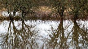 树枝的反射在秋天上色了水 免版税图库摄影