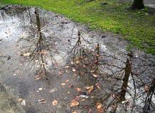 树枝的反射 库存照片
