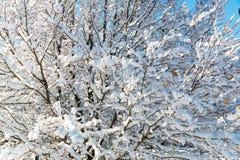 树枝的样式用雪报道的,自然本底 免版税库存照片
