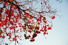 树枝红色叶子 免版税库存图片