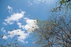 树枝缠结与云彩的在一个大风天 免版税图库摄影