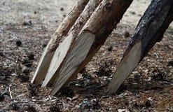 树枝被实施对篱芭 免版税库存照片