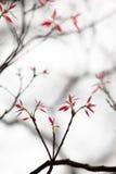 树枝诗歌 免版税图库摄影