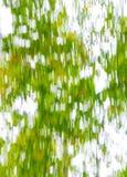 树枝部分地包括的晴朗的天空 库存照片