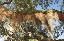 树枝长满与蕨 库存图片