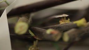 树枝,那被削减成小片断,在桌上的谎言 股票录像