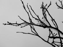 树枝阴影 免版税库存图片