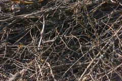 树枝-浪费木材产业 库存图片