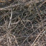 树枝-浪费木材产业 免版税库存图片