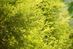 树某一分支在框架(选择的焦点)的中心和 图库摄影