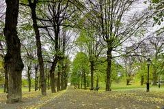 椴树柱廊在公园 免版税库存照片