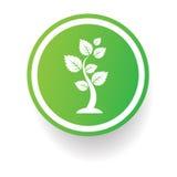 树标志,在白色背景的按钮 免版税库存照片