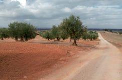 树树丛与光秃的红色地球的和穿过树丛的土路 库存照片