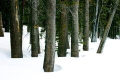 树树丛在冬天 免版税库存照片