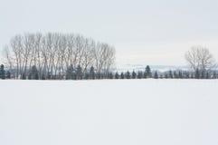 树树丛的冬天风景 库存照片
