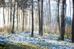 树树干在一个森林里在冬天 免版税库存图片