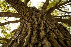 树树干 免版税库存照片