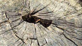 树树桩 库存照片