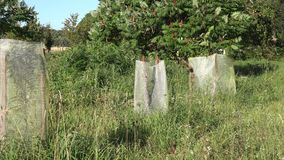 树树苗保护与网免受野生动物在农村房子庭院里增长 徒升 4K 影视素材