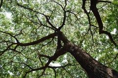 树树荫 库存图片