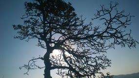 树树荫 库存照片