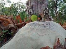 树根吠声纹理,自然创作背景墙纸 图库摄影