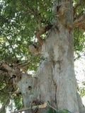 树根吠声纹理,自然创作背景墙纸 免版税库存图片
