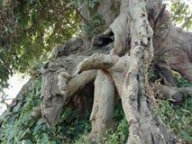 树根吠声纹理,自然创作背景墙纸 库存照片