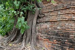 树根和树皮与老砖墙 免版税库存图片
