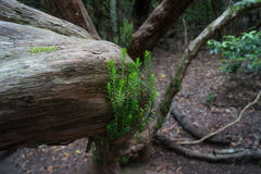 树根和青苔在希腊 免版税库存照片
