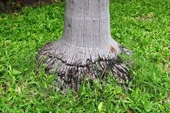 树根和绿色森林 库存照片