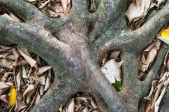 树根在地面上的 库存照片